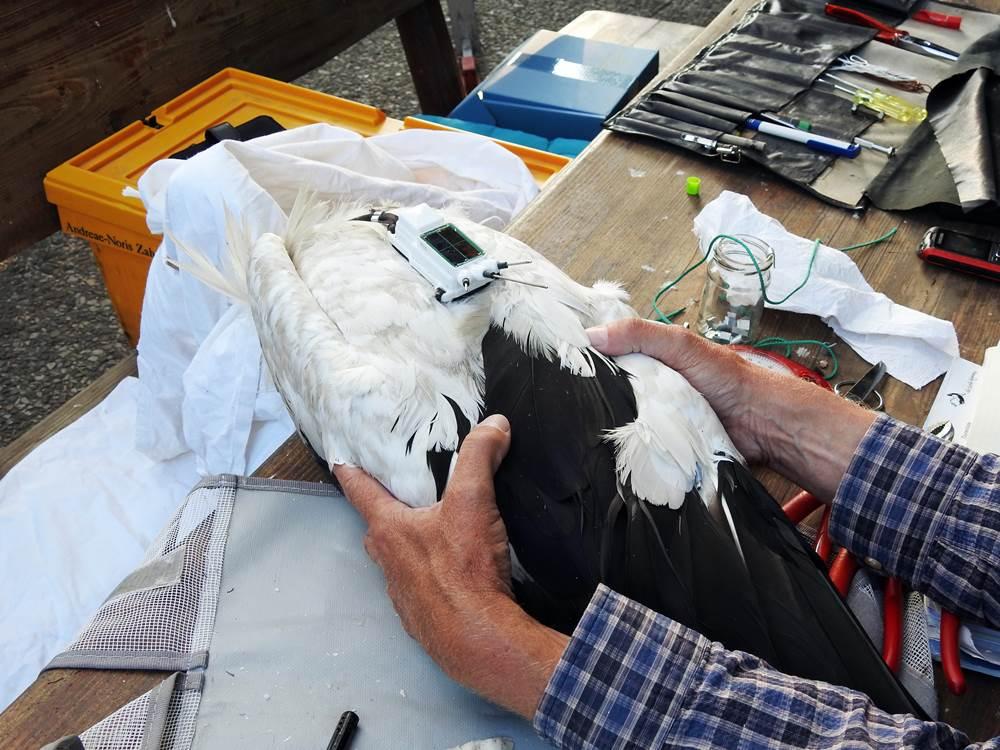 Ein Storch wird besendert