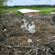 5 in einem Nest