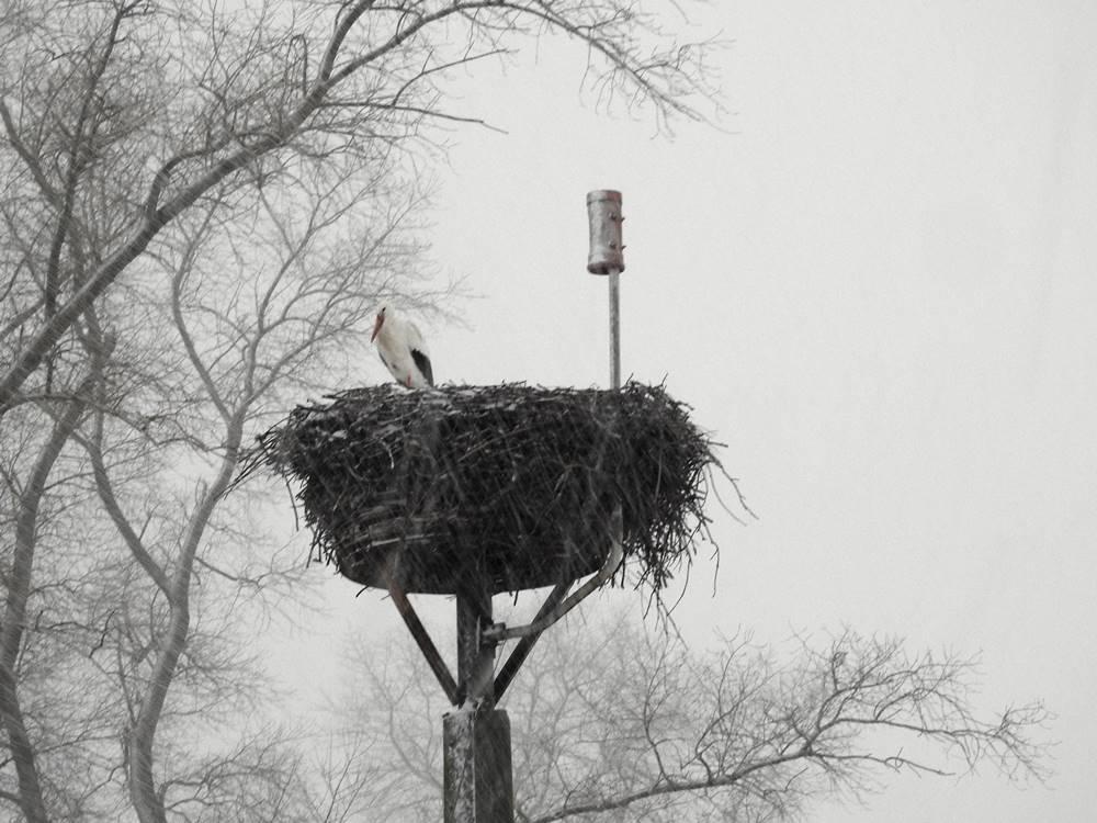 Storch im Schnee 2021